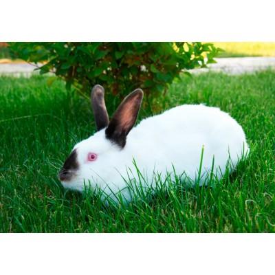 Вакцинація кролів - що обрати?